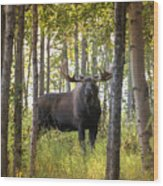 Bull Moose In Fall Forest Wood Print