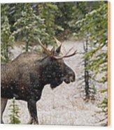Bull Moose In Snow Fall Wood Print