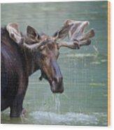 Bull Moose In Water Wetland Pond Lake Wood Print