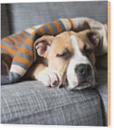 Bulldog Mix Puppy Sleeping On Gray Sofa Wood Print