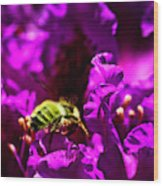 Bumble Bee On A Rhodedendron  Wood Print