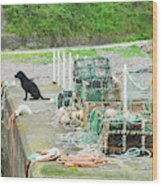 Burnmouth Harbour With Dog On Pier And Lobster Pots Wood Print