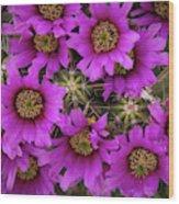Burst Of Fuchsia Cactus Flowers Wood Print