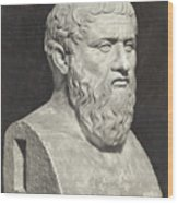 Bust Of Grecian Philosopher Plato Wood Print