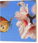 Butterfly And Pink Almond Tree Blossom Wood Print