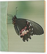 Butterfly At Rest Wood Print