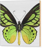 Butterfly Lepidoptera With Green, Black Wood Print