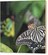 Butterfly Perfect Wood Print
