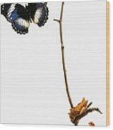 Butterfly Transformation Wood Print