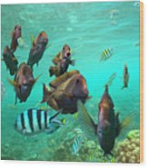 Butterflyfish And Sergeant Major Wood Print