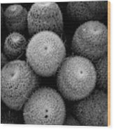 Cactus Black And White 5 Wood Print