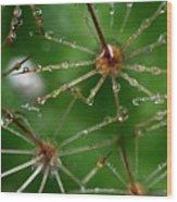 Cactus Flowers 01 Wood Print