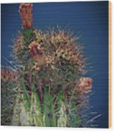 Cactus With Pink Flower Wood Print