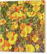 California Poppies - 2019 #3 Wood Print