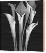 Calla White and Black Wood Print