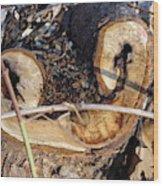 Canal Stumps-017 Wood Print