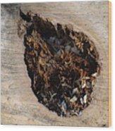 Canal Stumps-018 Wood Print