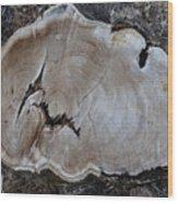 Canal Stumps-058 Wood Print