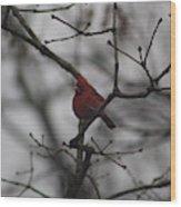 Cardinal On The Limb Wood Print