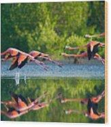 Caribbean Flamingos Flying Over Water Wood Print