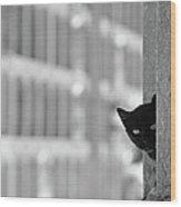 Cat In Cemetery Wood Print