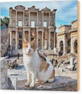 Cat In Front Of The Library Of Celsus Wood Print