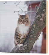 Cat Outdoors In The Winter Is On The Wood Print