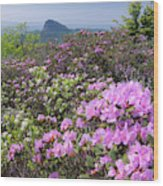 Catawba Rhododendron Table Rock  Wood Print