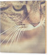 Cats Whiskers Wood Print