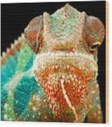 Chameleon Wood Print