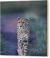 Cheetah Acinonyx Jubatus Wood Print