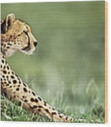 Cheetah Acinonyx Jubatus Stretching Wood Print
