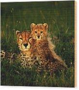 Cheetah Acinonyx Jubatus With Cubs In Wood Print