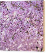 Cherry Blossom Flowers Wood Print