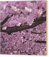 Cherry Blossom Tree Panorama Wood Print