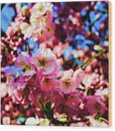 Cherry Blossoms 1 Wood Print