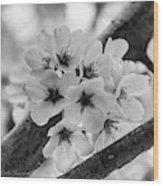 Cherry Blossoms 2019 E Wood Print