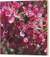 Cherry Blossoms 2019 IIi Wood Print