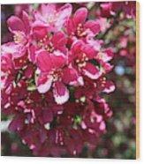 Cherry Blossoms 2019 Iv Wood Print