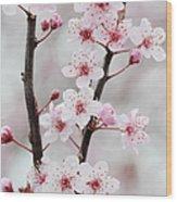 Cherry Plum Purple Plum Pink Flowers On Wood Print