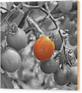 Cherry Tomatoes Partial Color Wood Print