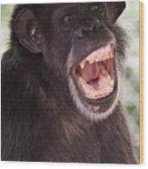 Chimp With Mouth Open Wood Print