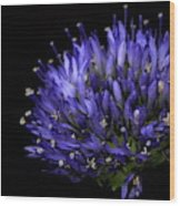 Chives Flower Wood Print