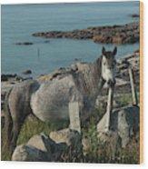 Cleggan Connemara Wood Print
