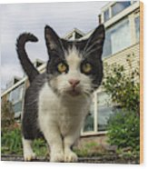 Close Up Cat On The Street Wood Print