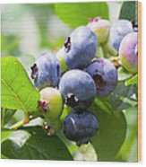 Close-up Of Blueberry Plant And Berries Wood Print