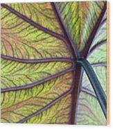 Close Up Of Colocasia Esculenta Leaf Wood Print