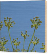 Close Up Of Fennel Flowers. On Sky Background Wood Print