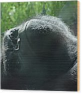 Close-up Of Frowning Adult Mountain Gorilla Wood Print