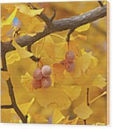 Close-up Of Gingko Tree In Autumn Wood Print